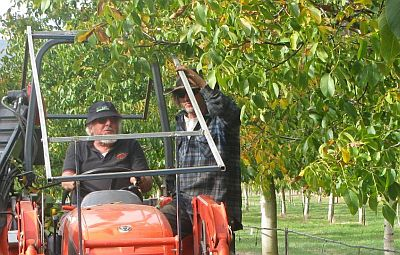photo of walnut grower and trees